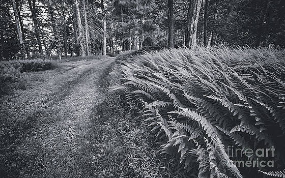 Grassy Path by Aaron Campbell