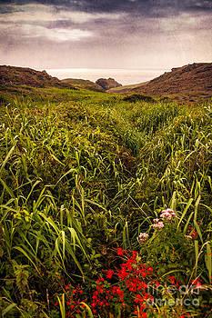 Svetlana Sewell - Grassy Path