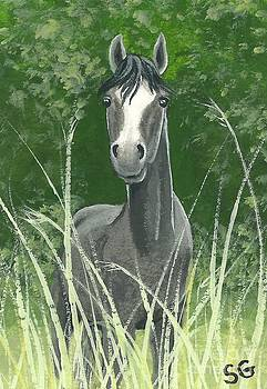 Gray Mare -- Let's Play Hide and Seek by Sherry Goeben