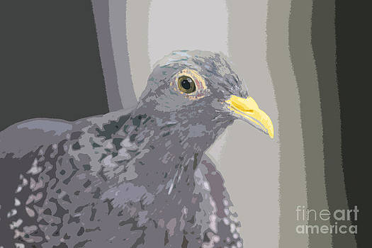 Gray Pigeon by Bob and Jan Shriner