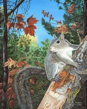 Gray Squirrel by Marshall Bannister