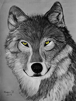 Gray wolf by Maggie Ullmann