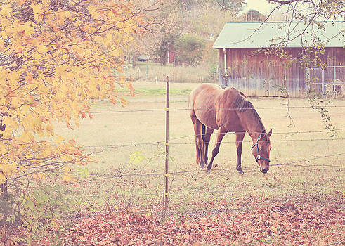 Grazing Horse by Jessie Gould