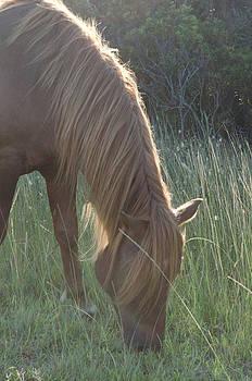 Grazing Horse by Nancy Edwards