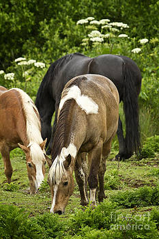 Grazing Horses by Carrie Cranwill