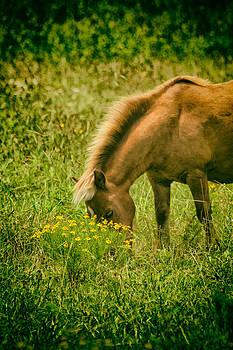 Karol  Livote - Grazing Pony
