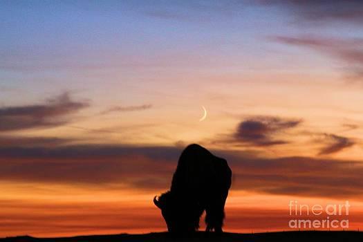 Adam Jewell - Grazing Under The Moon