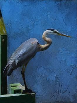 Great Blue by Forest Stiltner