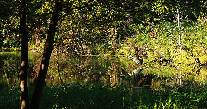 Great Blue Heron Reflecting by James Hammen
