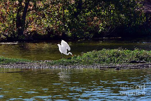 Susan Wiedmann - Great Egret In Its Realm