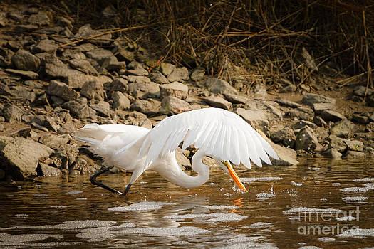 Michael McStamp - Great Egret One