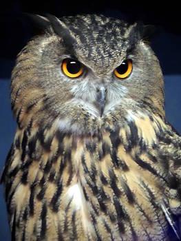 Great Horned Owl by Loretta Orr