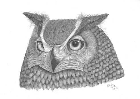 Great Horned Owl by Patricia Hiltz