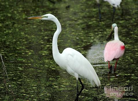 Great White Egret by Theresa Willingham