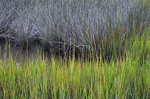 Green and Gray Marsh Grasses on Jekyll Island by Bruce Gourley
