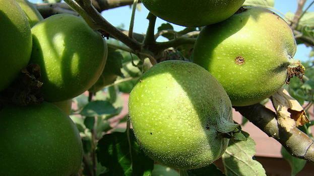 Green Apples by Ionut Salavastru