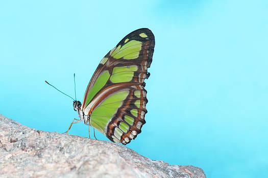Green Butterfly II by Beauty Balance Design