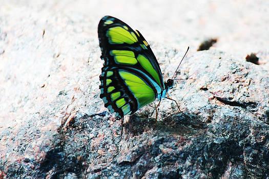 Green Butterfly by Beauty Balance Design