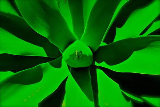 Green Dream by Natali  Bravo