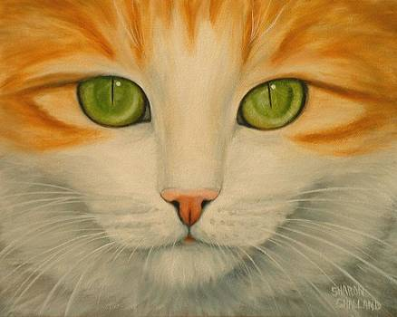Green Eyed Cat - Looking at You by Sharon Challand