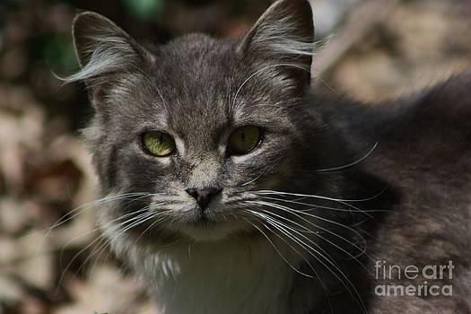 Green Eyed Kitty Cat by Robert D  Brozek