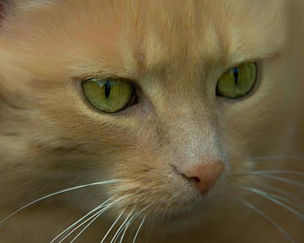 Green Eyes by Jacqi Elmslie