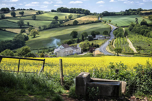 Green Fields And A Country Road by Michael Carter