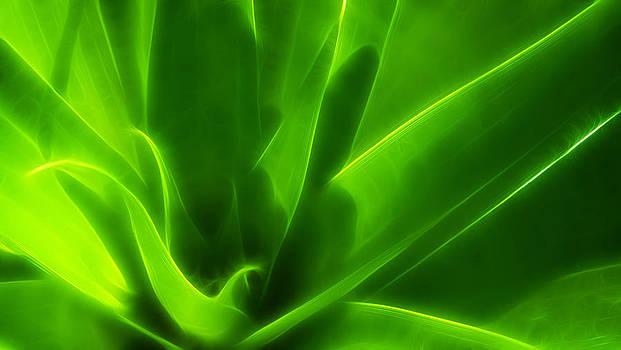 Green Flame by Suradej Chuephanich