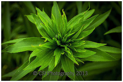 Green Flower by CSH Photography