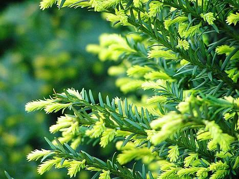 Green Idyll by Oleg Zavarzin