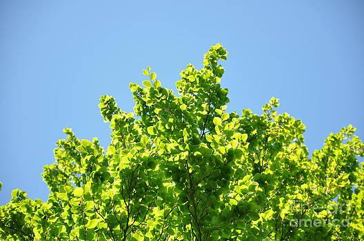 Green leaf tree 2 by Anatoliy Tarasiuk
