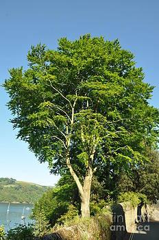 Green Leaf Tree 3 by Anatoliy Tarasiuk