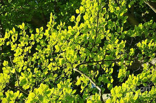 Green Leaf Tree 4 by Anatoliy Tarasiuk