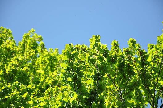 Green Leaf Tree by Anatoliy Tarasiuk