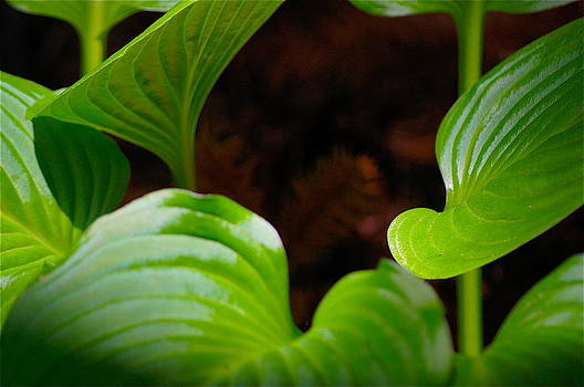 Green Leaves by Colleen Renshaw