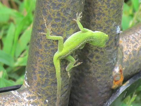 Green Lizard by Pamela Morrow