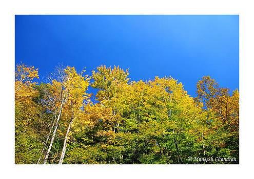Green Onto Blue by Maneesh Chandran