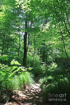 Green Path  by AR Annahita
