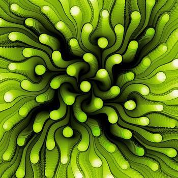 Anastasiya Malakhova - Green Sea Anemone
