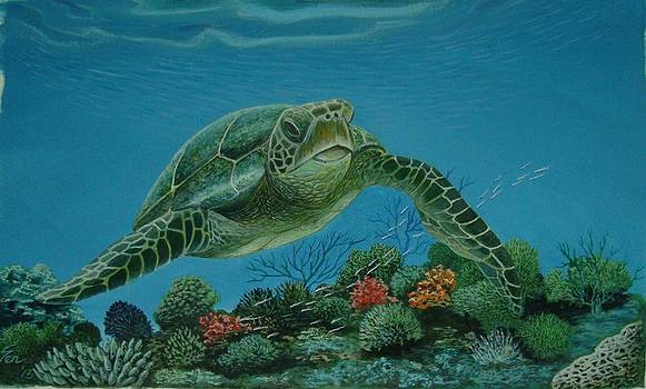 Green Sea Turtle by Pravin  Sen
