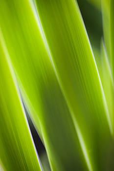 Blade of grass by Silke Magino
