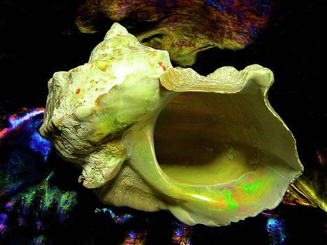 Frank Wilson - Green Turban Seashell