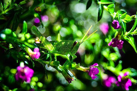Green Visitor in the False Heather by Brian Xavier