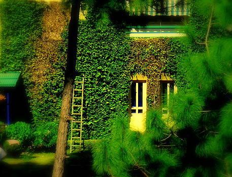 Green Wall by Salman Ravish