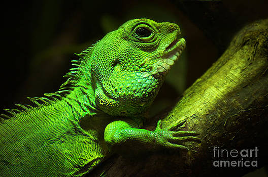 Angela Doelling AD DESIGN Photo and PhotoArt - Green water dragon