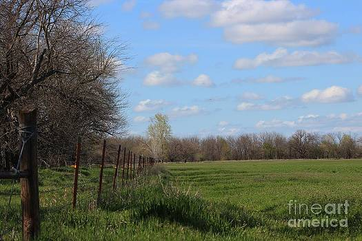 Green Wheat field with Blue sky by Robert D  Brozek