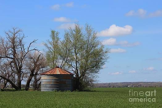 Green Wheatfield with an OLD Grain Bin by Robert D  Brozek