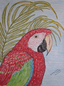 Green Winged Macaw by Kathy Marrs Chandler