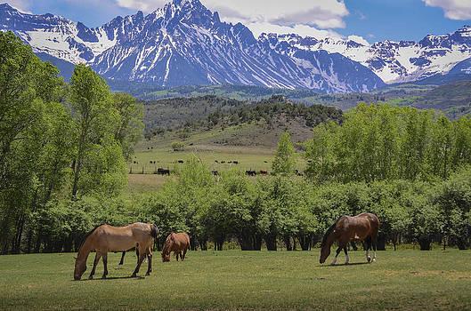 Greener Pastures by Debbie Karnes