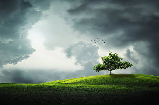 Grey clouds over field with tree by Bess Hamiti